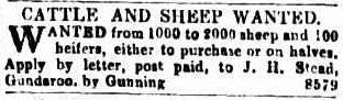 SteadwantsSheep Sydeny Morning Herald 26June1843