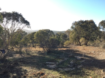 Site of killing yard/slaughterhouse, 500m south of Dalton, New South Wales